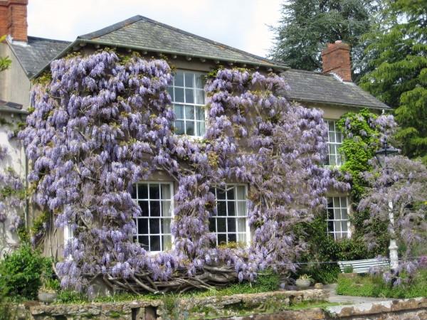 Popínavé rostliny na domě