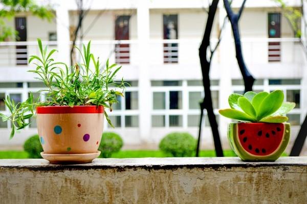 bonsai-781882_640