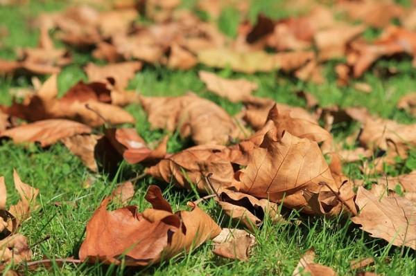 autumn-473059_640