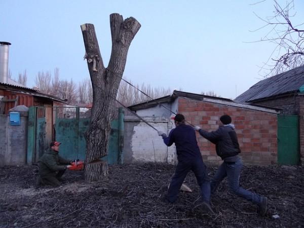saw-cut-87116_640