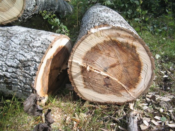 tree-242910_640