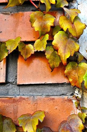 autumn-183347_640