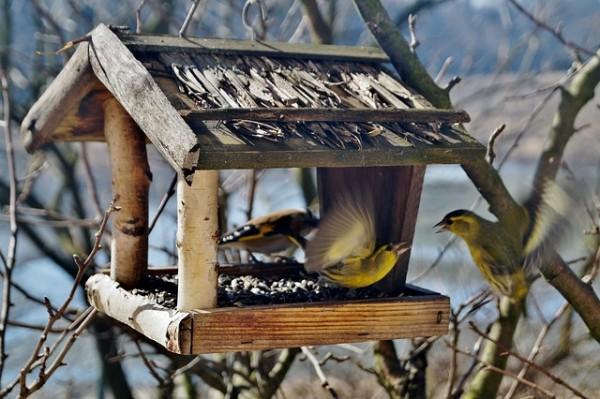 birds-664232_640