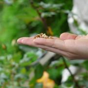 Pítka a krmítka: přitáhněte na zahradu ptactvo