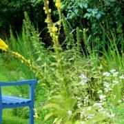 garden-bench-888035_960_720