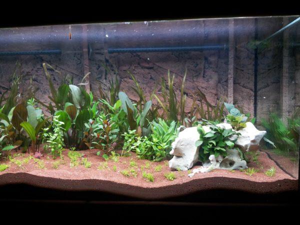 aquarium-248144_960_720
