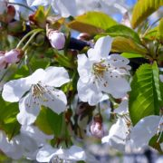 flowers-1374290_960_720
