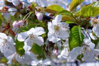 Naučte se vysazovat ovocné stromky