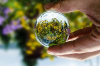 glass-ball-with-flowers
