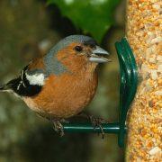 Usnadněte ptáčkům zimu