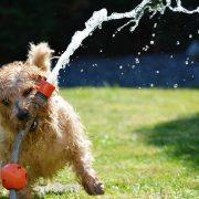 Jak upravit zahradu, aby byla vhodná a bezpečná pro psa