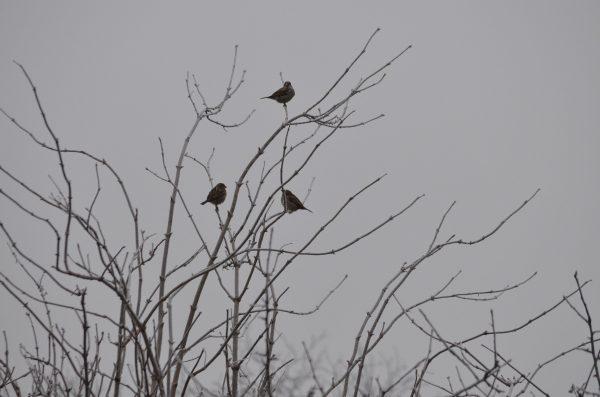 ptáci na stromech