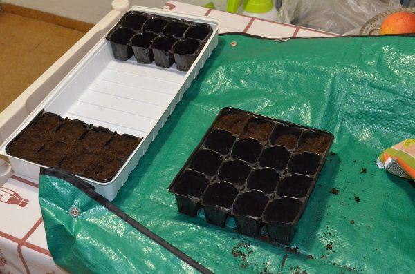 výsev rajčat