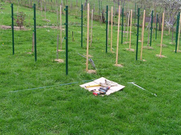 osazené sloupy vinohradu