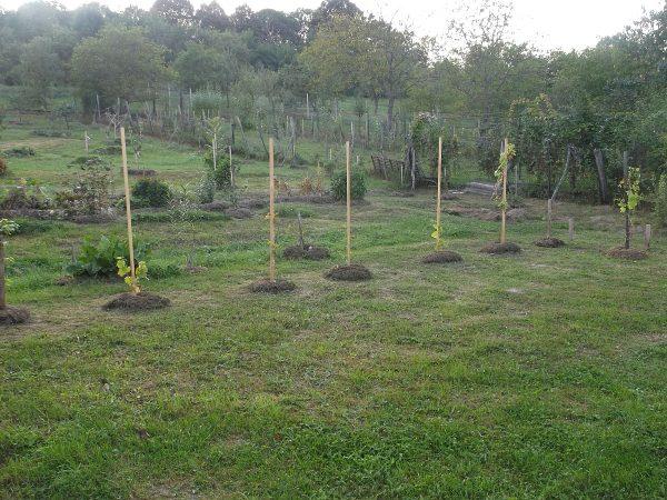 Zakládáme vinohrad na zelené louce