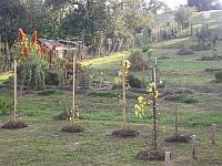 Malý vinohrad v zahradě