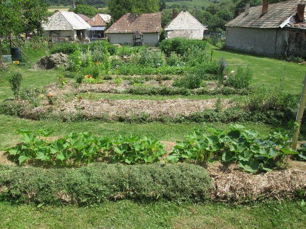zamulčované záhony v zahradě
