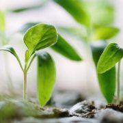 Kdy začít sázet zeleninu na zahrádce?