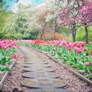 Zahradní architekt aneb dopřejte si krásnou zahradu